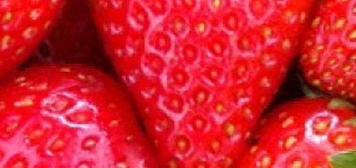 Плоды и цветы клубники Остара вблизи