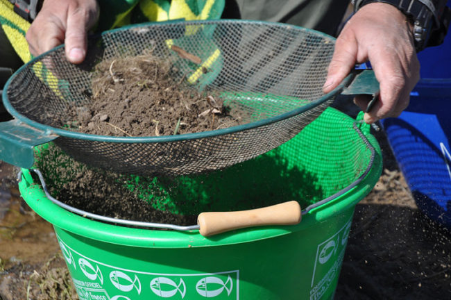Просев дерновой земли для внесения под клубнику