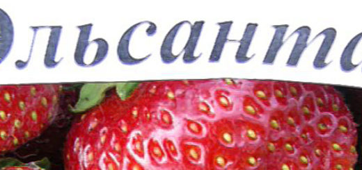 Плоды клубники сорта Эльсанта вблизи
