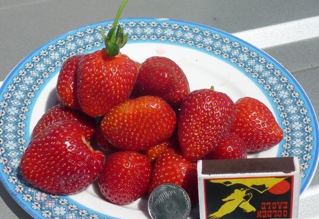 Спелые ягоды клубники сорта Флорина в тарелке