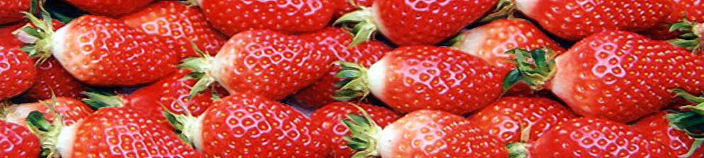 Плоды клубники Гаригуэтта вблизи