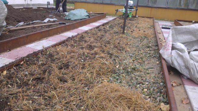Грядка после клубники под компостом из соломы