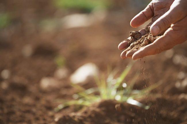 Почва в саду для высаживания
