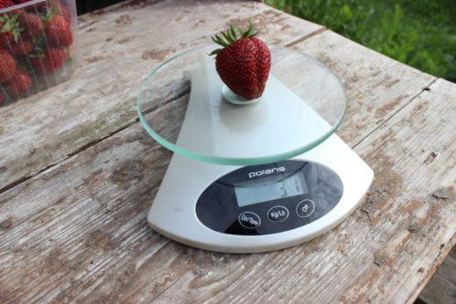 Вес ягоды клубники сорта Соловушка
