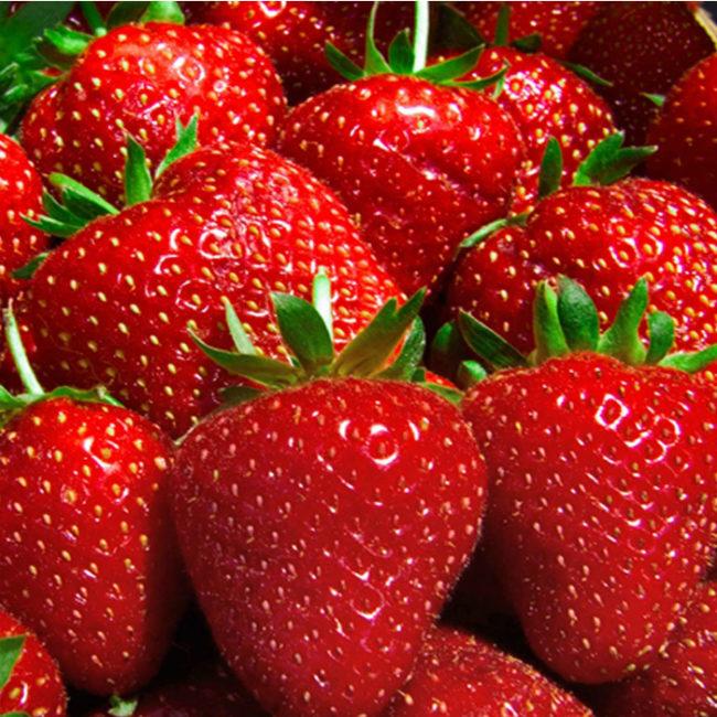 """Красные ягоды садовой клубники сорта """"Соната"""""""