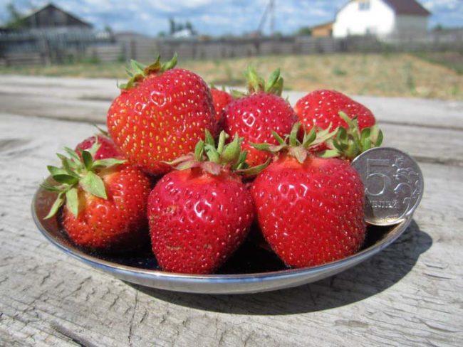 Горстка ягод клубники размером побольше монеты достоинством в 5 рублей