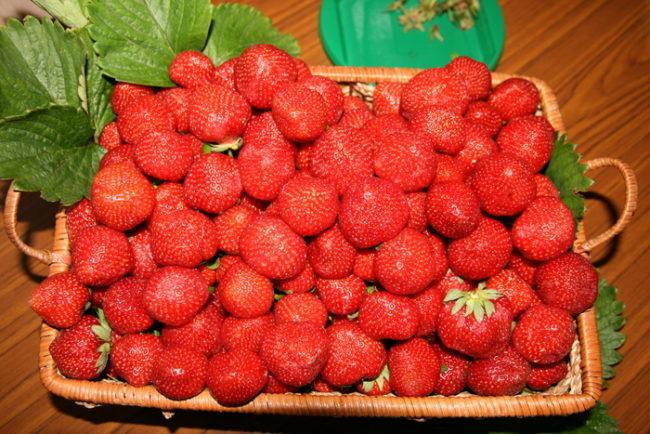 Корзинка с ягодами клубники Вима Занта