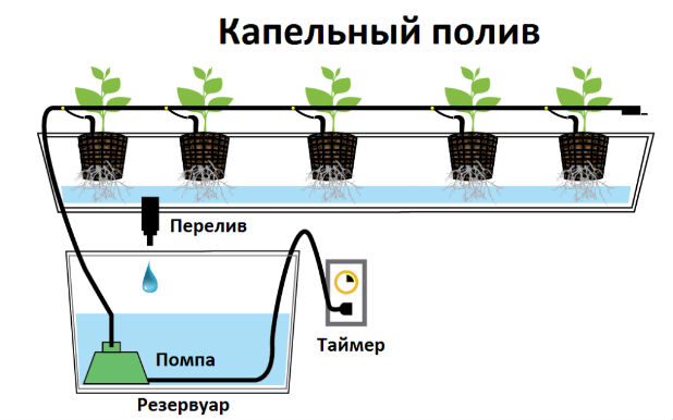 Схема капельного полива для домашней клубники