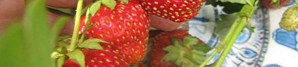 Спелые плоды клубники Кармен вблизи
