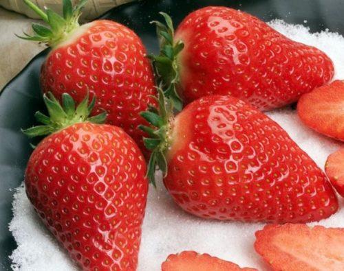 Красные ягоды клубники сорта Альба для варенья