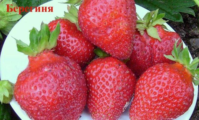 Крупные ягоды клубники Берегиня на тарелочке