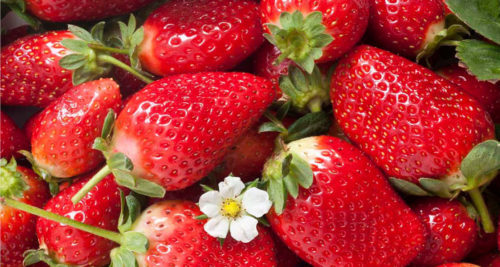 Сочные ягоды клубники сорта Гаригуэтта