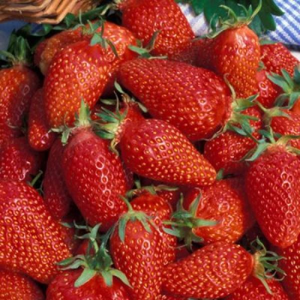 Горстка красных ягод клубники