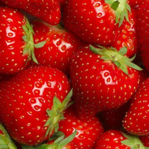 Глянцевые ягоды клубники сорта Эльсанта