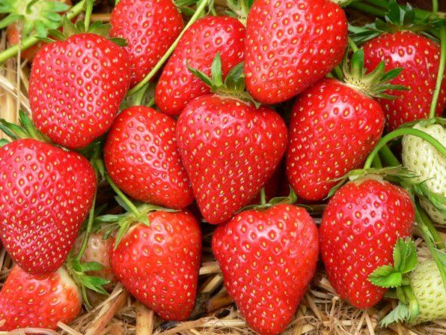 Горстка ягод клубники сорта Хоней