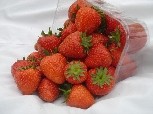 Палетка с ягодами клубники сорта Кристина