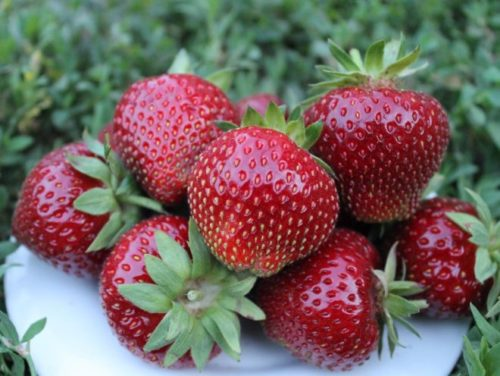 Горстка спелых ягод клубники насыщенно малинового цвета