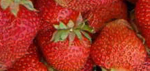 Плоды клубники Полка вблизи
