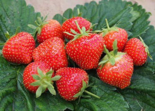 Кучка ягод садовой клубники