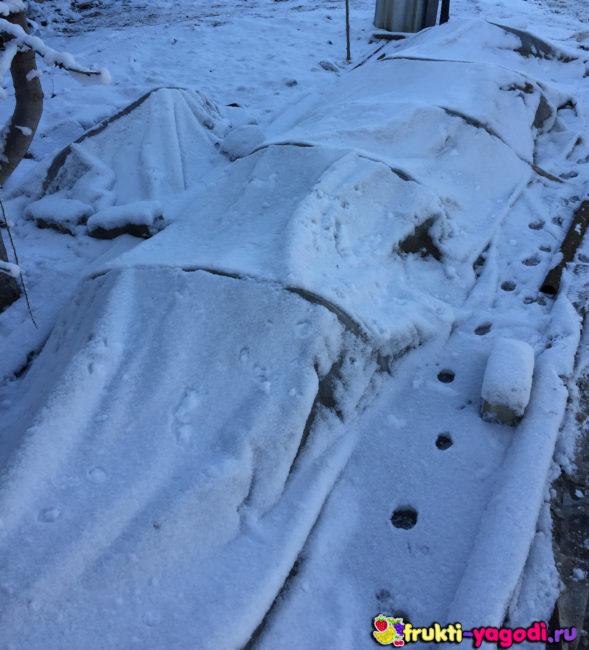 Укрытие вида теплицы для клубники на зиму и следы животных