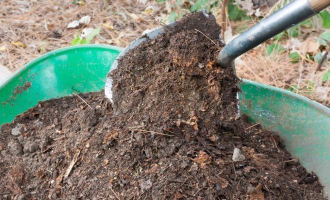 Ванна компоста для грядки с клубникой
