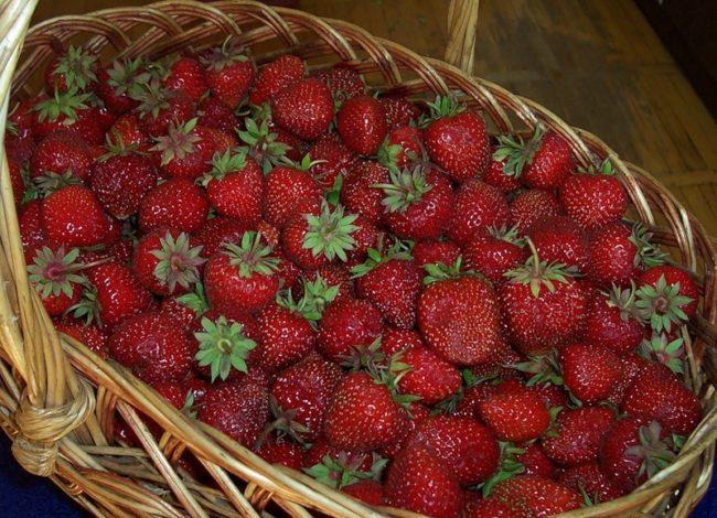 Корзина со спелыми ягодами клубники Ромашка Фестивальная