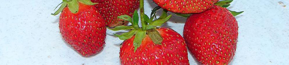 Плоды спелой клубники Машенька на тарелке