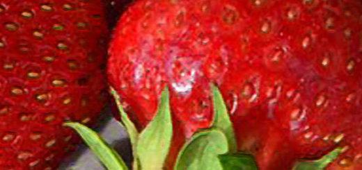 Плоды клубники Максим вблизи