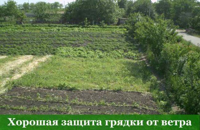 Место для выращивания клубники Верона