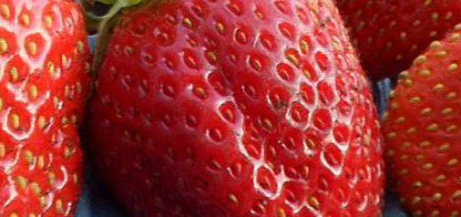 Спелые плоды клубники Мурано вблизи
