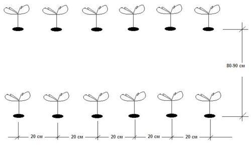 Однострочная посадка клубники