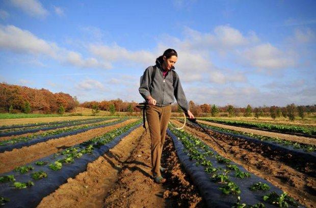 Опрыскивание плантации клубники ранней весной