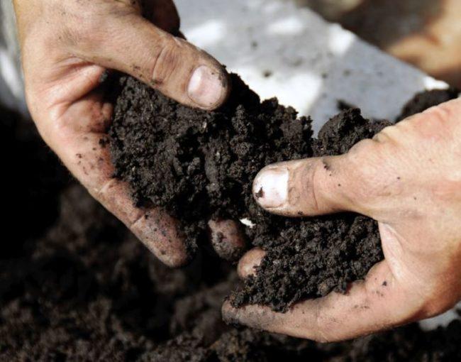 Питательный грунт для выращивания клубники