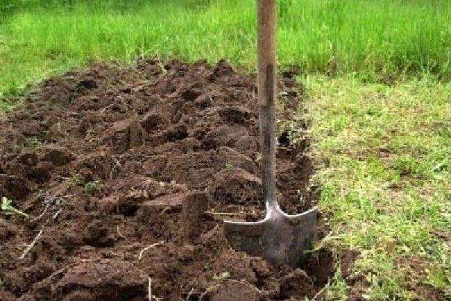 Штыковая лопата для перекопки грядки под посадку садовой клубники