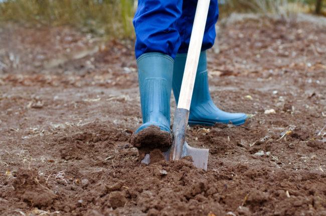 Перекопка земли лопатой