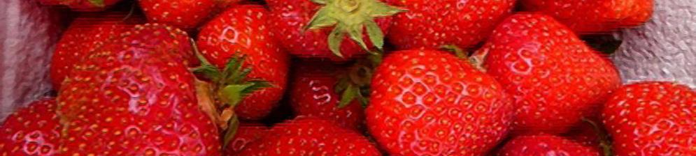 Плоды клубники Комсомолка вблизи