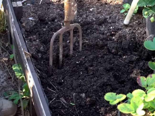 Подготовка почвы для клубники и вилы