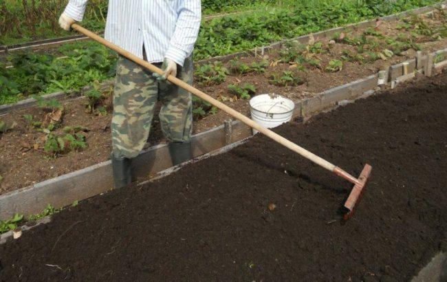 Выравнивание земли граблями на грядке под клубнику