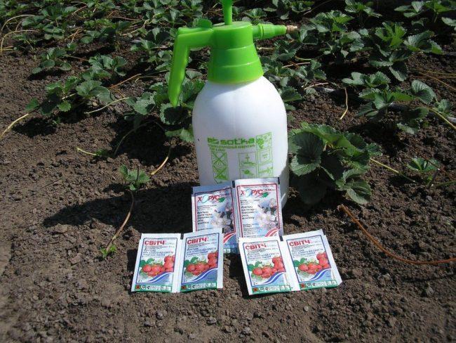Распылитель для обработки клубники от вредителей