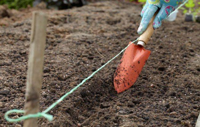 Борозда в земле с помощью совка