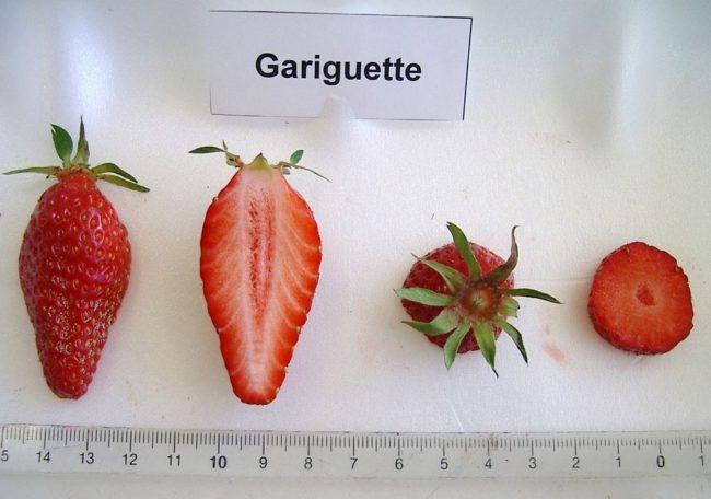 Разрез ягоды клубники сорта Гаригуэтта
