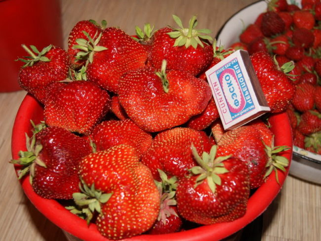 Чашка с ягодами клубники сорта Саксонка