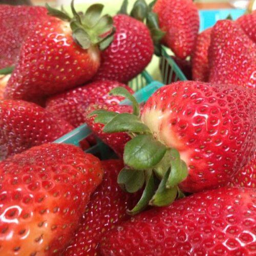 Горстка алых плодов ремонтантной клубники
