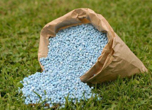 Аммиачная селитра в гранулах для летней подкормки садовой клубники