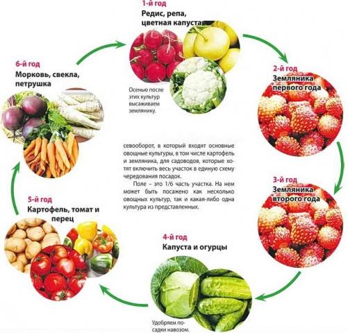 Схема выращивания растений на садовом участке на шесть ближайших лет