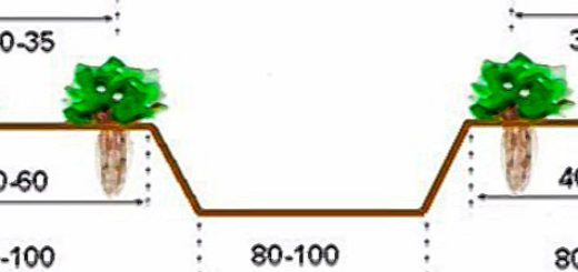 Расстояние между грядками клубники на схеме