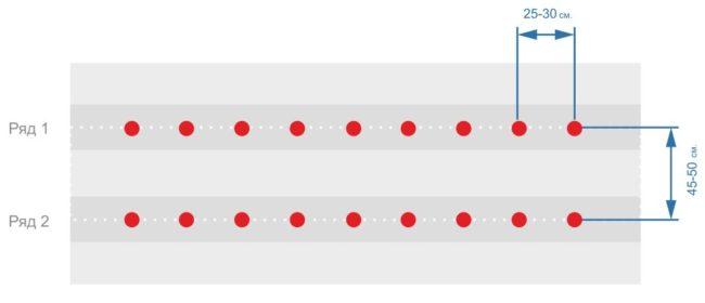 Расстояние между кустами и рядами клубники