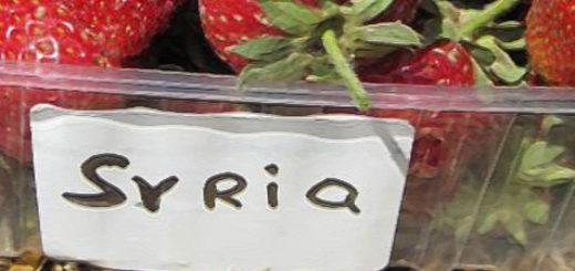 Сорванные спелые плоды клубники Сирия в пластиковой баночке