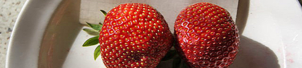Плоды клубники Соната вблизи