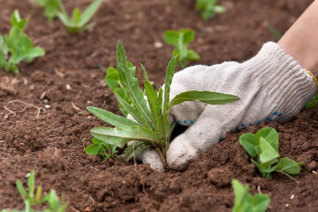 Удаление сорняков с земли